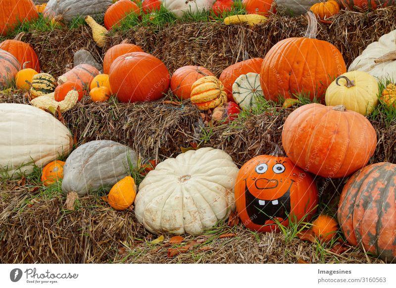 Kürbis Familie - Happy Halloween Lebensmittel Gemüse Kürbiszeit Kürbisgewächse Ernährung Bioprodukte Vegetarische Ernährung Diät Natur Herbst frech gruselig