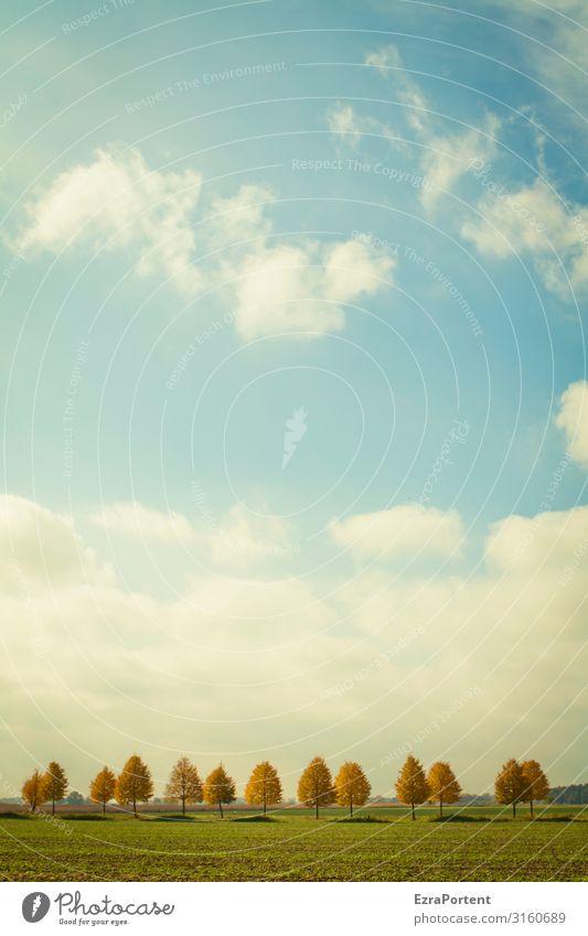 .|.||.||| |. || Himmel Natur blau grün weiß Landschaft Baum Wolken Herbst Umwelt Gras orange braun Wetter Schönes Wetter Klima