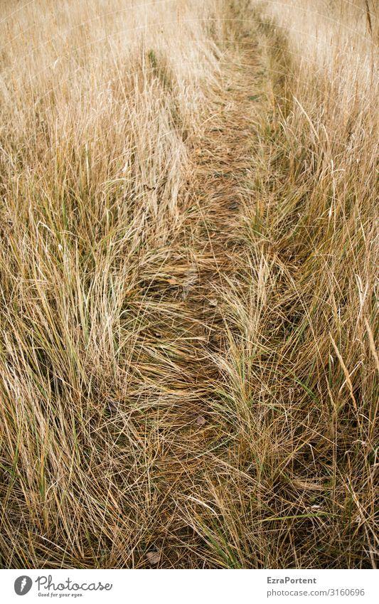 Trampelpfad Pflanze Gras Natur Wiese Sommer Menschenleer Landschaft Wege & Pfade Spuren
