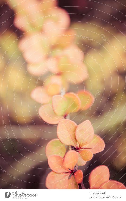Strauchdings Pflanze Herbst Natur Blatt Herbstlaub herbstlich Herbstfärbung Schwache Tiefenschärfe Herbstbeginn Stachel strauch