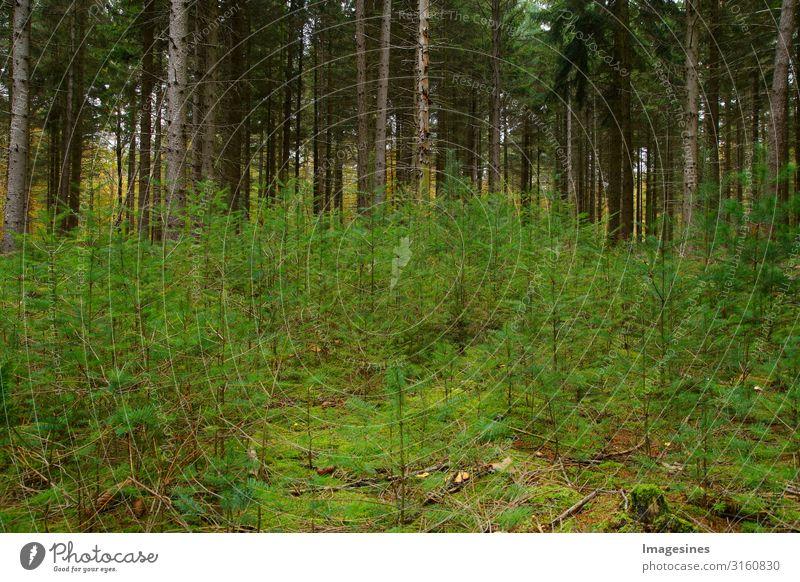 Klimaschutz - Wiederaufforstung Umwelt Natur Landschaft Pflanze Tier Herbst Klimawandel Baum Nadelwald Nadelbaum Wald Wachstum grün Verantwortung achtsam