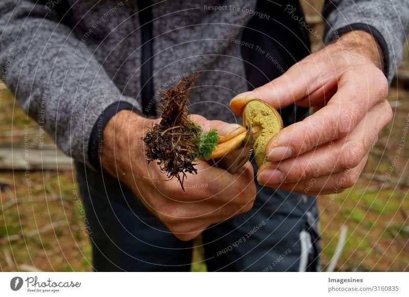 Pilz - Maronenröhrling - Braunkappe Lebensmittel Gemüse Pilzsucher Ernährung Lifestyle pilze sammeln Mensch maskulin Körper Hand 1 45-60 Jahre Erwachsene Umwelt