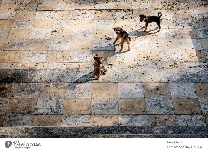 Puppies chess Ferien & Urlaub & Reisen Tourismus Abenteuer Ferne Sightseeing Städtereise Sommer Sehenswürdigkeit Tier Haustier Hund 3 Tiergruppe Tierjunges