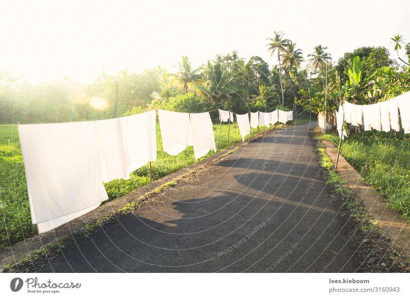White laundry in the tropics Ferien & Urlaub & Reisen Tourismus Ferne Sommer Natur Wolkenloser Himmel Sonnenaufgang Sonnenuntergang Sonnenlicht Wind Pflanze