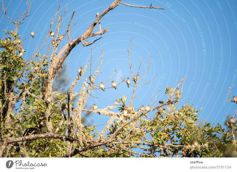 fauna+flora Baum Tier Vogel Wildtier sitzen Tiergruppe Schönes Wetter USA Oregon