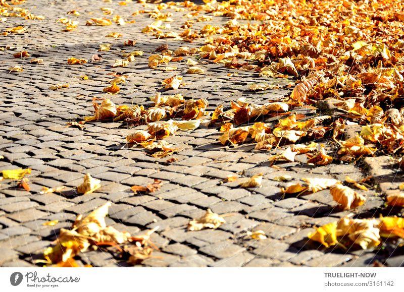 Trockenes Laub auf Pflastersteinen in der Herbstsonne Umwelt Natur Schönes Wetter Herbstlaub Altstadt Marktplatz Straße Straßenbelag braun gelb gold grau orange