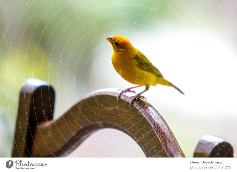 Was ist da links oben? Ferien & Urlaub & Reisen Expedition Natur Frühling Schönes Wetter Urwald Meer Tier Vogel Flügel 1 gelb Brasilien Amazonas Neugier