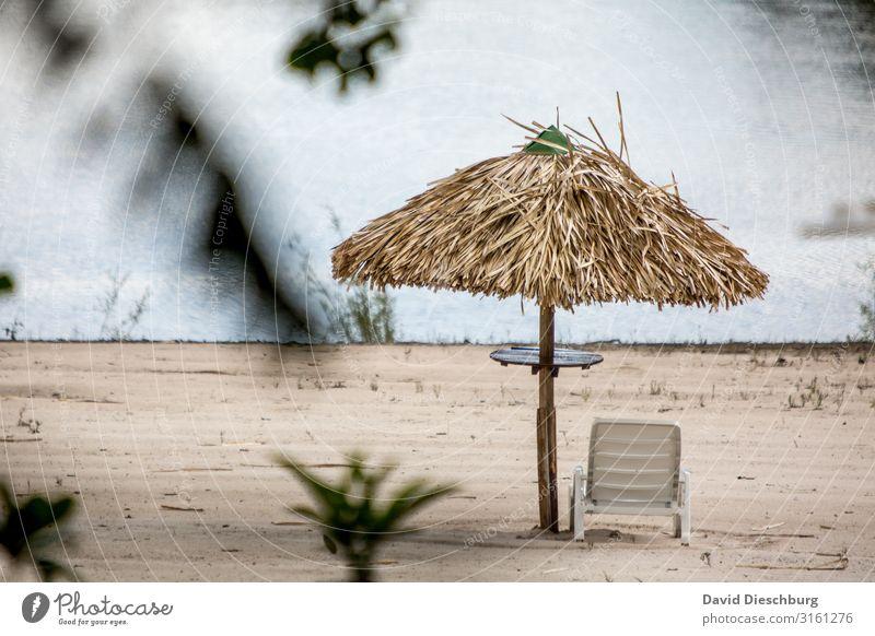 Platz am Rio Negro Ferien & Urlaub & Reisen Tourismus Ferne Expedition Sommerurlaub Sonnenbad Landschaft Wasser Pflanze Baum Urwald Küste Flussufer Strand Bucht