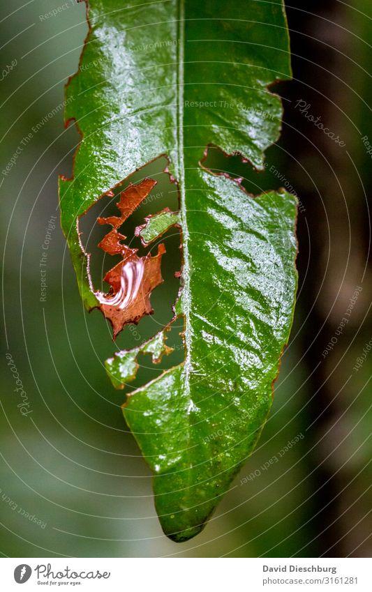 Wie ausgeschnitten Natur Pflanze Tier Sommer Herbst Regen Blatt Wald Urwald grün orange rot Fressen Raupe kaputt Raupenplage Plage Hochformat Brasilien Loch