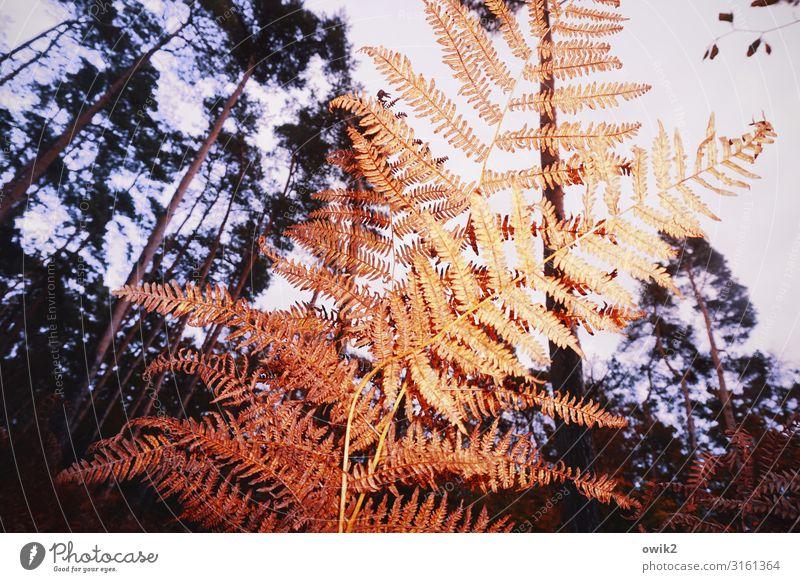 Abgefarn Ausflug Umwelt Natur Landschaft Pflanze Himmel Herbst Schönes Wetter Baum Sträucher Wildpflanze Echte Farne Wald alt dehydrieren unten Idylle Schutz