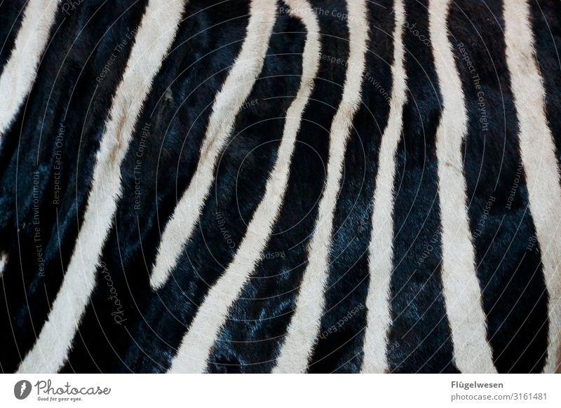 Abrakazebra Zebrastreifen Tier Muster Fell gestreift