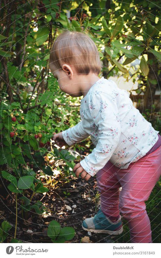 Mädchen pflückt im Garten Himbeeren vom Strauch Mensch feminin Kind Kleinkind Kindheit Körper Rücken Hand Finger 1 1-3 Jahre Sommer Pflanze Sträucher