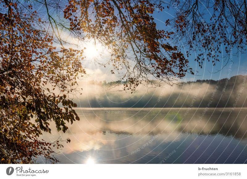 Herbstmorgen am See Zufriedenheit Ferien & Urlaub & Reisen Natur Sonnenaufgang Sonnenuntergang Sonnenlicht Nebel Pflanze Blatt Wald Seeufer gehen genießen