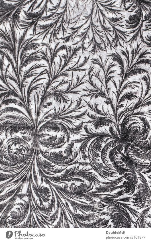 Frostige Eisblumen-Ornamente auf Tafel entstanden durch Wasser und Kälte Kunst Dekoration & Verzierung Holz frieren machen zeichnen Wachstum alt ästhetisch