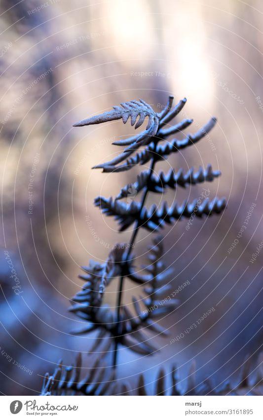 Dem Licht entgegen Natur Pflanze Einsamkeit dunkel Herbst kalt natürlich Traurigkeit Eis träumen ästhetisch authentisch einzigartig geheimnisvoll Frost