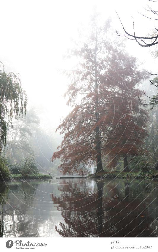 morgens im park Natur Baum ruhig Herbst kalt natürlich See Nebel Gelassenheit Kurpark