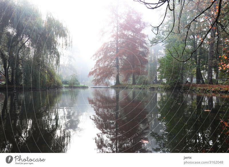 herbstmorgen Natur Landschaft Baum ruhig Herbst natürlich außergewöhnlich See hell Park frisch Nebel glänzend Hoffnung Gelassenheit Flüssigkeit
