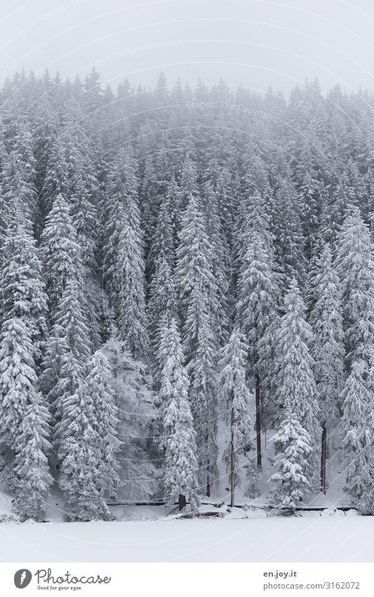 Winterkleid Natur Landschaft schlechtes Wetter Nebel Eis Frost Schnee Wald Berge u. Gebirge Wege & Pfade kalt weiß ruhig Klima Ferien & Urlaub & Reisen