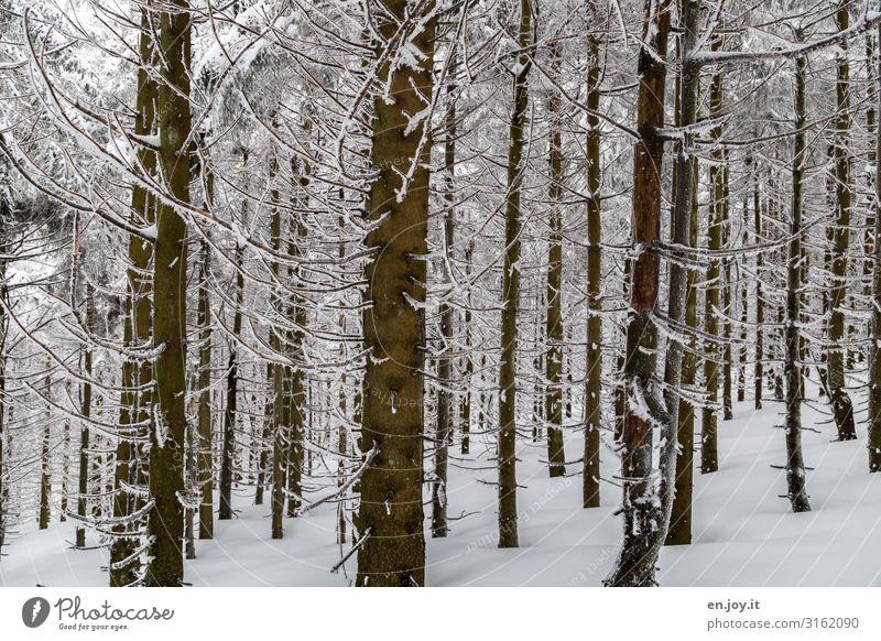 ausharren Natur Landschaft Winter Wald ruhig kalt Klima Umwelt Winterwald Winterstimmung Wintertag Baumstamm Farbfoto Gedeckte Farben Außenaufnahme Menschenleer