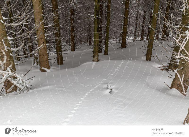 verschwunden, aber nicht spurlos Natur Landschaft Winter Klima Klimawandel Eis Frost Schnee Wald kalt weiß Winterurlaub Winterwald Winterstimmung Wintertag