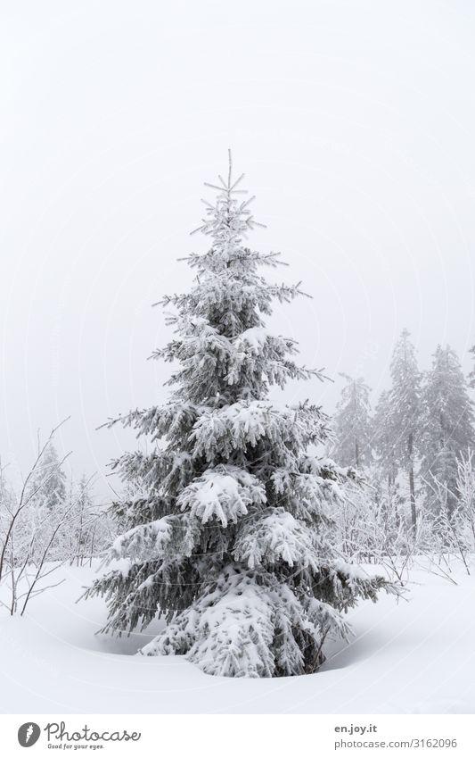 is doch auch schön Natur Landschaft Himmel Winter schlechtes Wetter Nebel Eis Frost Schnee Baum Tanne Nadelbaum kalt weiß Klima Winterwald Winterstimmung