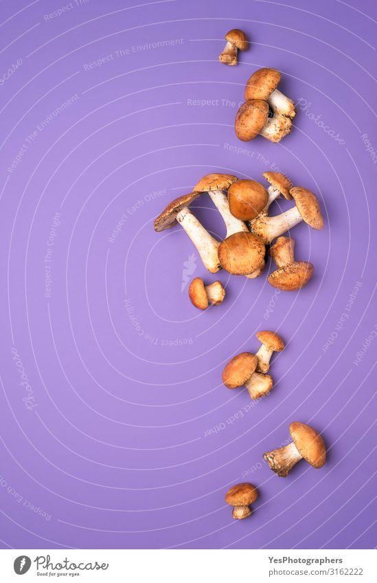 Herbstliche Waldpilze auf violetter Tischplatte. Essbarer Honigpilz Gemüse Bioprodukte Vegetarische Ernährung Gesunde Ernährung frisch lecker natürlich