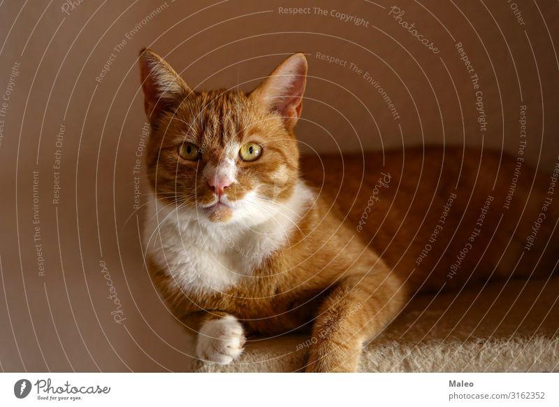 Schöne rote Katze Fotograf Hauskatze Fotokamera Tier Katzenauge Katzenbaby lustig Haustier schön süß Auge