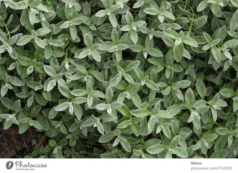 Junge grüne Triebe im Garten Hintergrundbild schön Natur Blatt Frühling Grünpflanze Sommer Nahaufnahme Pflanze