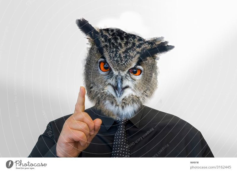 Man with owl head raises his finger androgyn Kopf Finger 1 Mensch Tier Wildtier Vogel Eulenvögel gruselig listig klug Inspiration seriös Surrealismus man