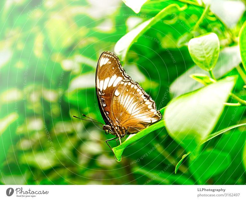Schmetterling Tier Zoo 1 fliegen Ferien & Urlaub & Reisen braun grün weiß Schmetterlingshaus Farbfoto Innenaufnahme Nahaufnahme Detailaufnahme Makroaufnahme Tag