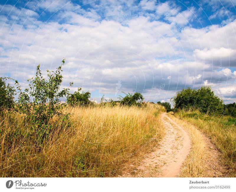 Sommerweg Sommerurlaub wandern Natur Landschaft Himmel Wolken Klima Schönes Wetter Gras Sträucher Feld Hügel Wege & Pfade Fußweg Sand Erholung genießen träumen