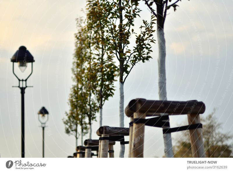 Wegführung Umwelt Natur Landschaft Himmel Wolken Herbst Winter Schönes Wetter Baum Blatt Pappeln alt ästhetisch elegant historisch hoch natürlich neu positiv