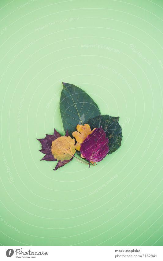 Stapel bunter Herbstblätter Lifestyle Freizeit & Hobby Garten Erntedankfest Umwelt Natur Pflanze Baum Blatt Blüte verblüht dehydrieren authentisch modern
