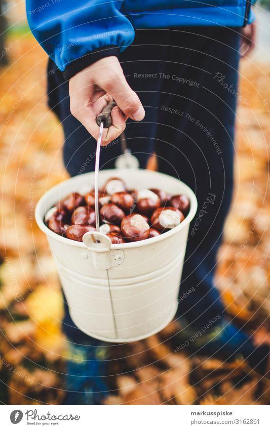 Junge sammelt Kastanien Kind Mensch Natur Pflanze Baum Freude Herbst Familie & Verwandtschaft Bewegung Glück Garten Spielen Freizeit & Hobby Körper Kindheit