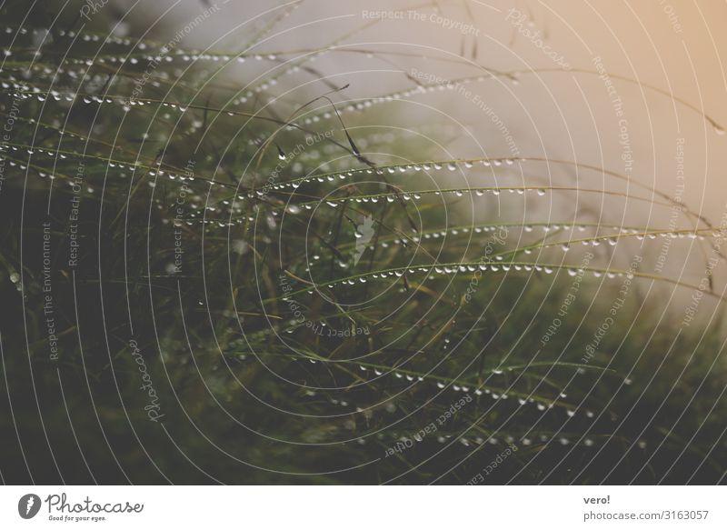 Nasses Gras Ausflug Freiheit Berge u. Gebirge wandern Umwelt Natur Pflanze Wassertropfen Herbst schlechtes Wetter Regen Alpen beobachten entdecken glänzend