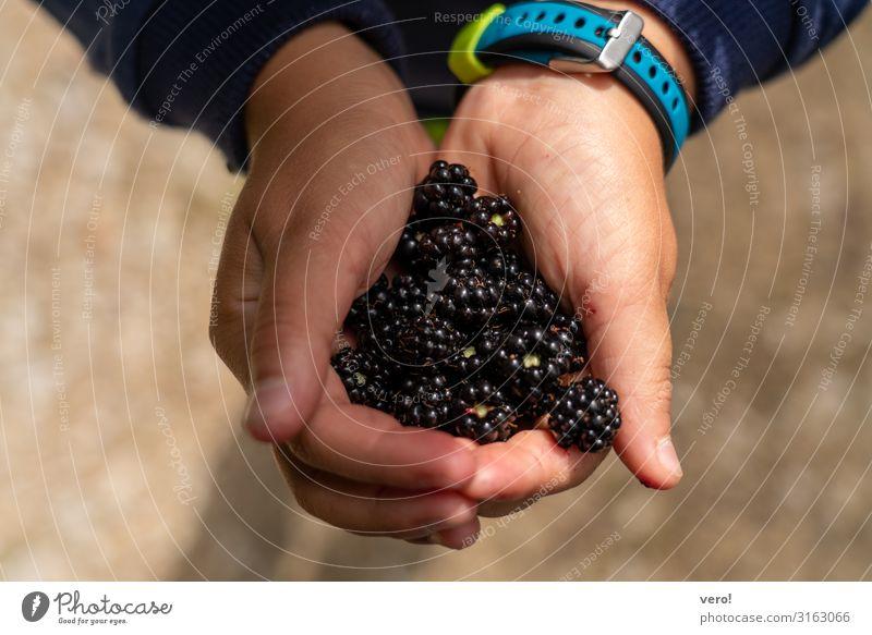Eine Portion Brombeeren bitte! Frucht Ernährung Bioprodukte Vegetarische Ernährung Fingerfood gesundes Obst gepflückt Freude Ausflug Kindererziehung Hand 1