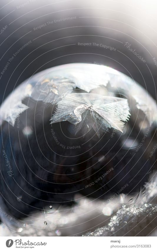 Wenn sie wachsen Eis Frost Kugel Eiskristall Kristallstrukturen außergewöhnlich kalt Hoffnung Überraschung Vergänglichkeit Wandel & Veränderung kurzlebig