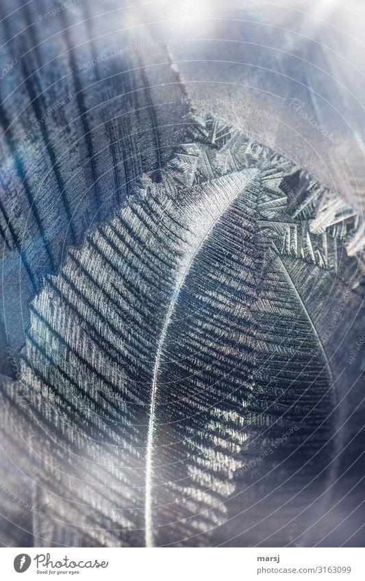 Eis am Kiel Winter Frost Kristallstrukturen Kristalle ästhetisch außergewöhnlich dünn authentisch elegant kalt Kraft Hoffnung Glaube demütig einzigartig Kunst