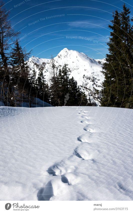 Auf dem richtigen Weg Ferien & Urlaub & Reisen Natur Einsamkeit Winter Ferne Berge u. Gebirge kalt Schnee Tourismus Freiheit Ausflug wandern Erfolg Abenteuer