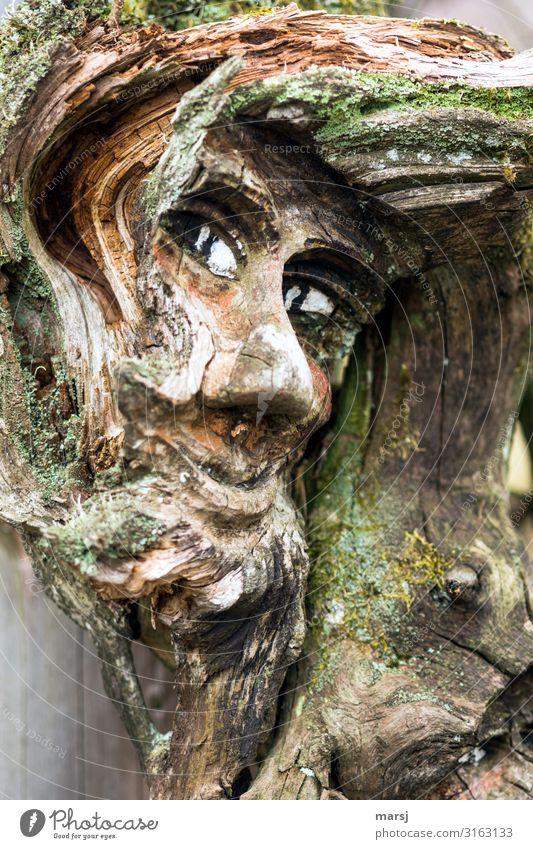 Die Frisur sitzt Mensch Kopf Auge Kunstwerk Skulptur Holz alt beobachten außergewöhnlich gruselig braun überwachen Tarnung Moos verfallen Farbfoto