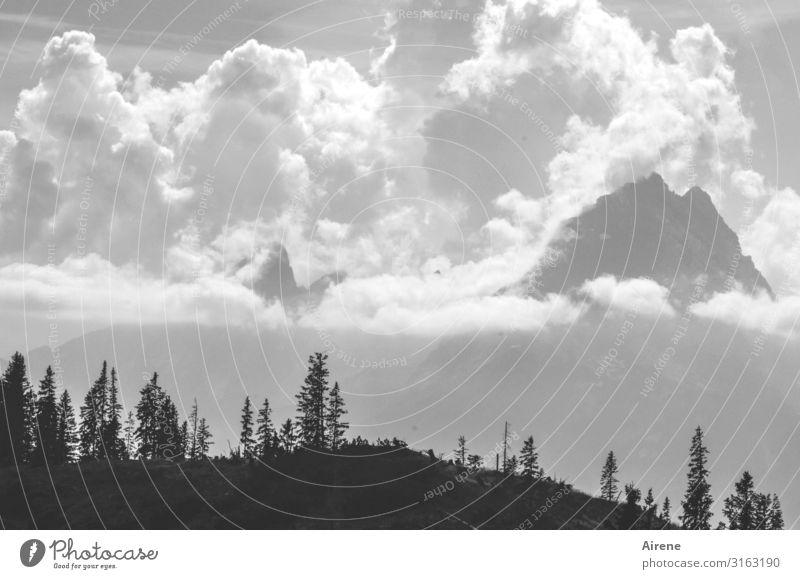 Wolken Berge Berge u. Gebirge wandern Himmel Schönes Wetter Alpen Watzmann Gipfel Bergwald gigantisch hoch schwarz weiß Lebensfreude Erfolg Höhenangst