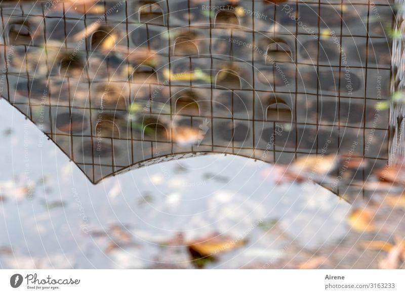 Hamburg, die regenreiche | UT Hamburg Urelemente Wasser Herbst Blatt Herbstlaub Pfütze Architektur Sehenswürdigkeit Elbphilharmonie ästhetisch außergewöhnlich