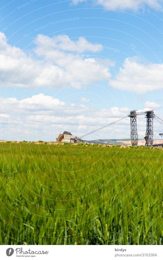 Vor dem Grubenrand Landwirtschaft Forstwirtschaft Braunkohlenbagger Umwelt Landschaft Himmel Wolken Frühling Klimawandel Schönes Wetter Feld Getreidefeld