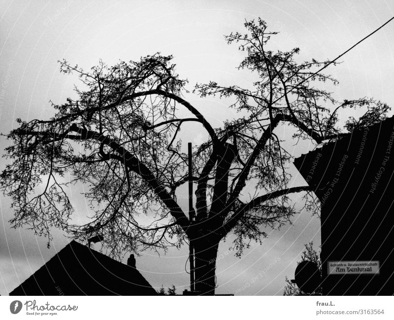 Dorflinde in Degersen trinken Winter schlechtes Wetter Baum Menschenleer Haus alt einfach kaputt trashig Langeweile Traurigkeit Kitsch skurril Dorfmitte Linde