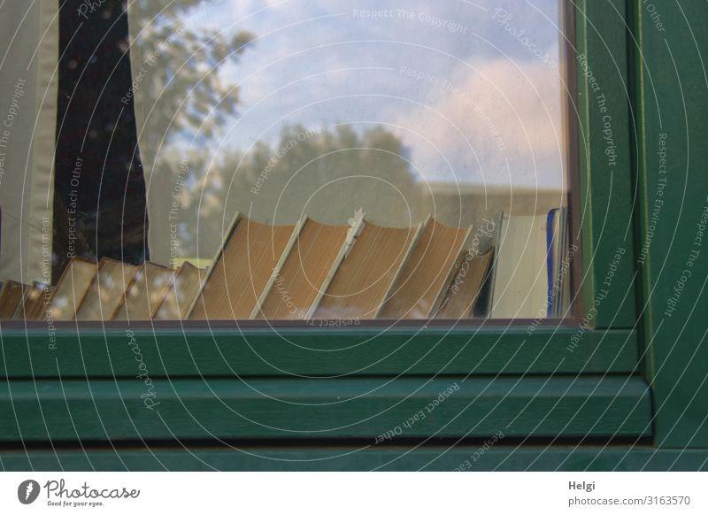 Ausschnitt eines Fensters mit vielen stehenden Büchern auf der Fensterbank Stadt Haus Fensterscheibe Fensterrahmen Buch lesen Häusliches Leben authentisch