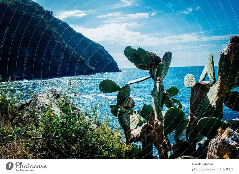 Italienische Küste Sommer Riomaggiore Europa Dorf Ferien & Urlaub & Reisen Cinque Terre Kaktus Meer Felsen Farbfoto