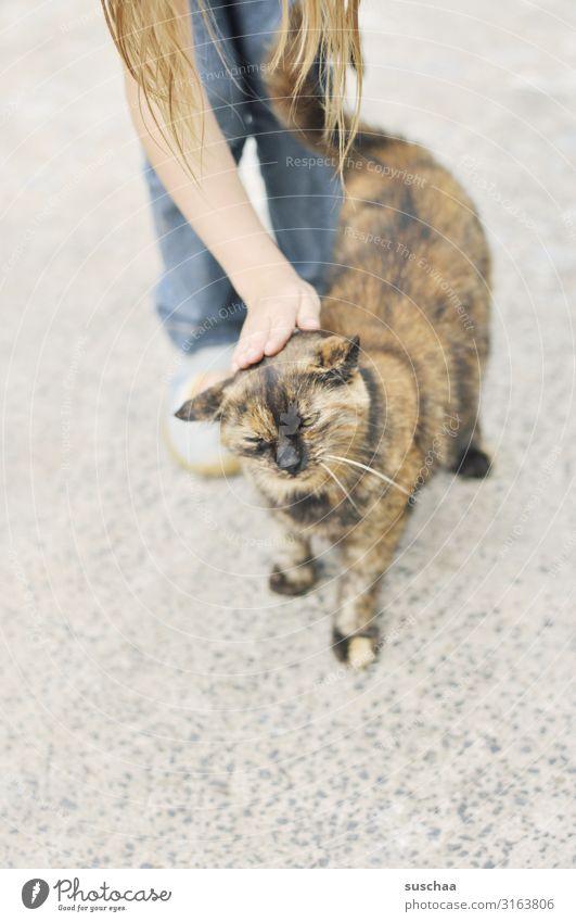 katze streicheln Kind Mädchen Katze Hauskatze Haustier Streicheln genießen Hand Fell gemütlich Liebe mögen Tierliebe Leben Lebensfreude Schnurren Schnurrhaar