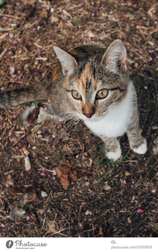cat content für inkje Tier Katze Tiergesicht Fell Pfote 1 beobachten klein Neugier niedlich Tierliebe Farbfoto Außenaufnahme Menschenleer Textfreiraum unten Tag