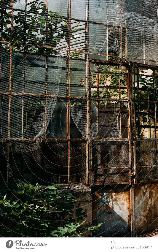 gewächshaus Natur alt Pflanze Umwelt Park Wachstum ästhetisch Vergänglichkeit Wandel & Veränderung Verfall exotisch Rost Botanik Zerstörung Gewächshaus