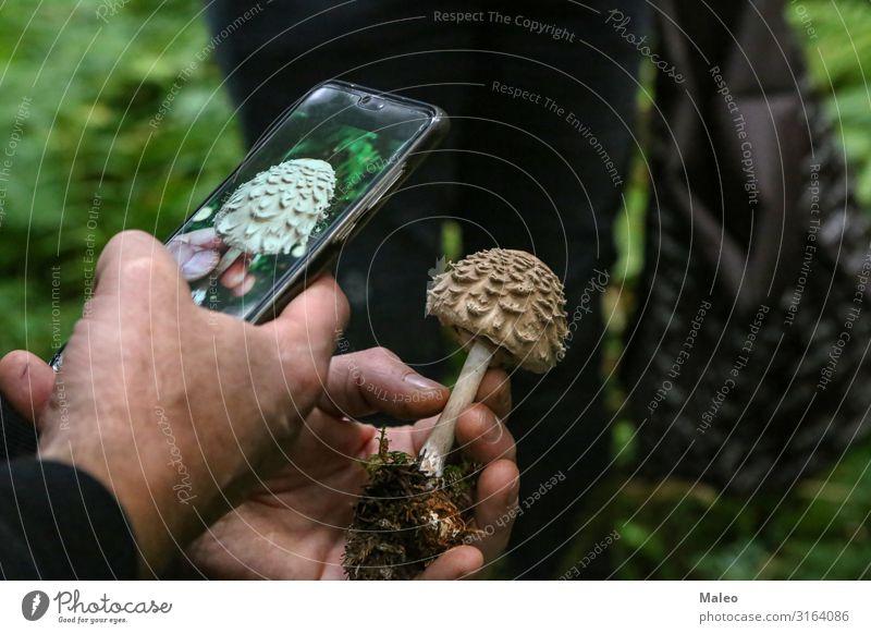 Pilzsammler fotografiert einen unbekannten Pilz braun Fotografie pflücken Bioprodukte Herbst ansammeln essbar Natur Wald Lebensmittel Pilzsucher Mensch